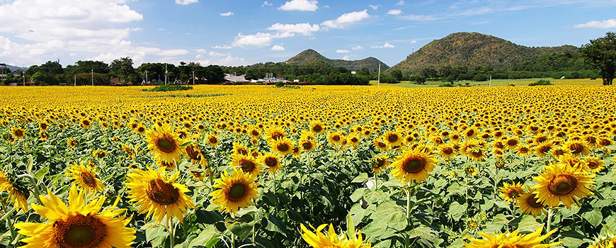 Explore the countrysideDiscover Khao Yai